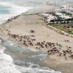 Viaja y conoce el Balneario de Asia en Lima