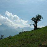 Descubren el Bosque de Zárate en Chosica