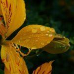 Descubre el Santuario del Amancay, la flor de Lima