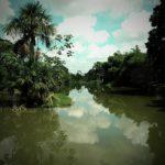 Descubre la Laguna de Yarinacocha