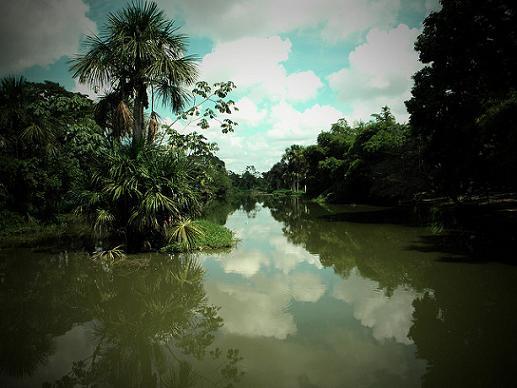 laguna-de-yarinacocha