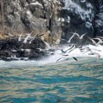 Delfines y ballenas de nuestras costas