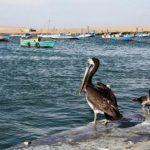 Ruta : Ica y Paracas en familia