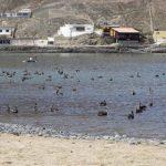 Escápate de Lima: el balneario de tortugas