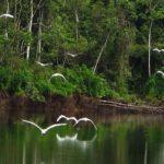 Conociendo la reservas de Pacaya Samiria