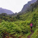 Trekking en la ceja de selva de Ayacucho